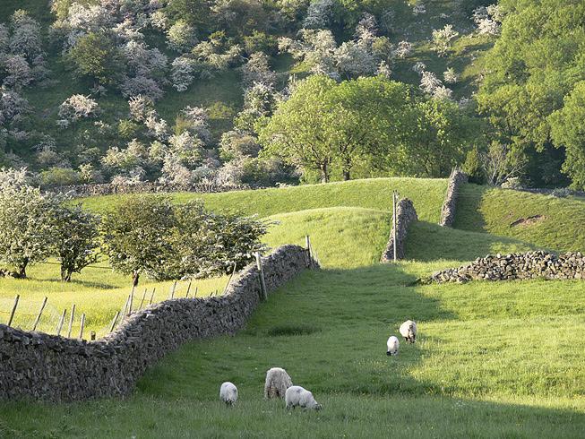 File:Sheep and May, Arkengarthdale.jpg