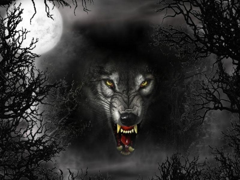 Las Mejores Cosas Suceden Cuando Menos Te Las Esperas Lobo