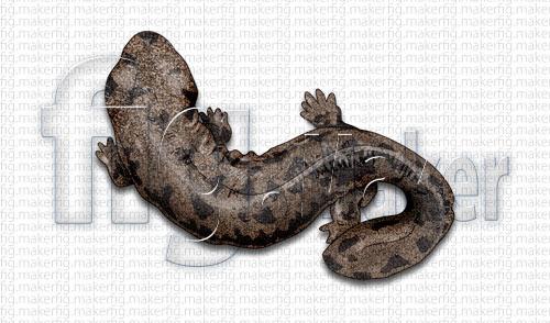 図版イラスト制作例動物図