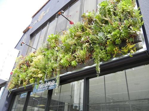 Plants on Walls 2365