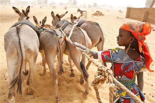 20 Νοεμβρίου 2012: Παγκόσμια Ημέρα Δικαιωμάτων του Παιδιού. Ένα κορίτσι οδηγεί γαιδουράκια στην Νιγηρία.