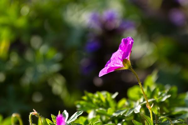 light through flower petals