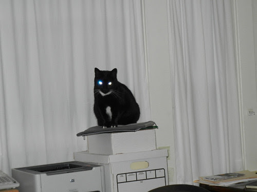 Cat Won _ 4545_500