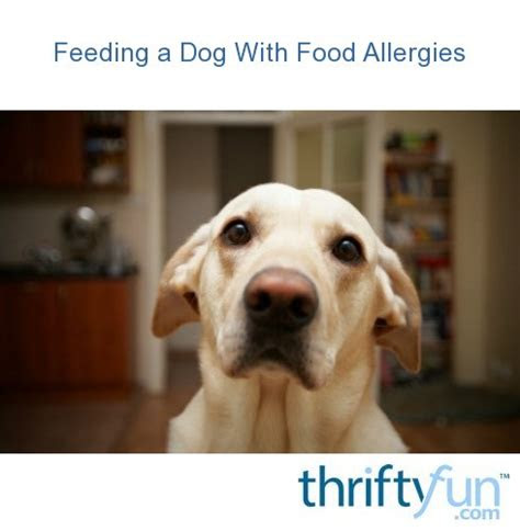 feeding  dog  food allergies thriftyfun
