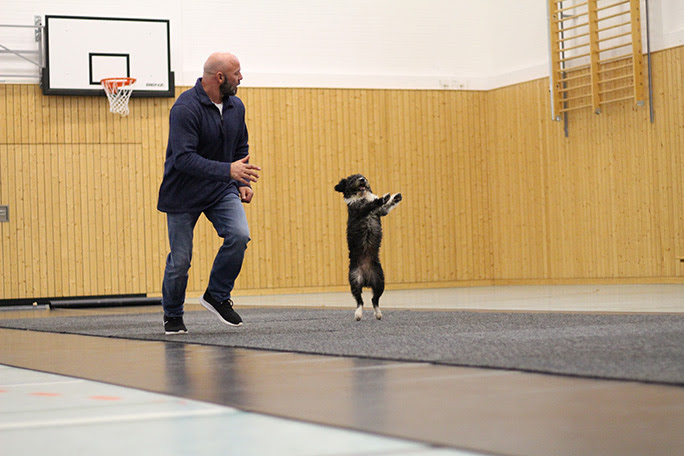 wolfgang-fast-10m-hind-أرجل