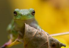 Froggy_1165