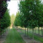 Tree Nursery Online
