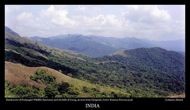 Rainforests of Pushpagiri wildlife sanctuary and hills of Kodagu (Coorg) District as seen from Girigadde below Kumara Parvata peak in Western Ghats