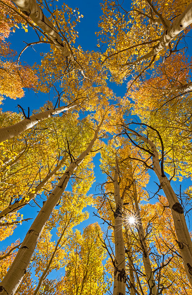 Aspen grove lookup, Bishop CA