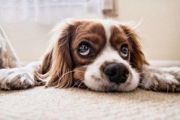 ¿Cómo adiestrar a un perro fácilmente en casa?
