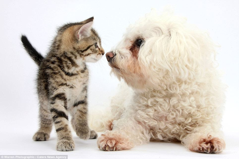 Aksi Lucu Anak Kucing Bebek Dan Anjing Ketika Poto Bareng