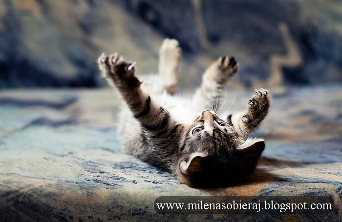 playful kittenSM