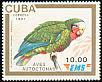Cuban Amazon Amazona leucocephala
