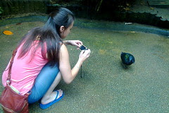 Take picture of a bird