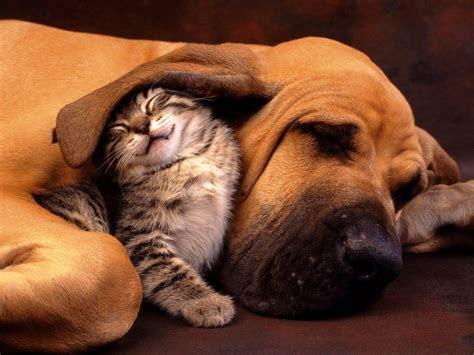 Funny Animals   Animal Humor Photo (29016367)   Fanpop