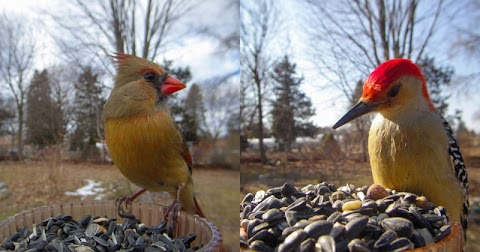 This Feeder-Mounted Camera Catches Striking, Closeup Photos of Birds