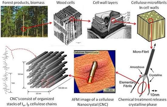 Nanocelulose: nanotecnologia da madeira promete superar plásticos