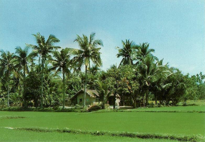 http://www.ibiblio.org/pub/multimedia/pictures/asia/vietnam/scenery/lqnhatrg.jpg