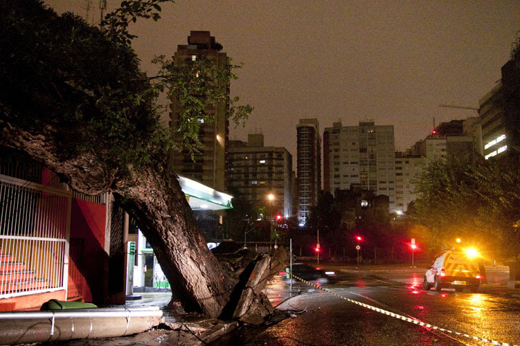 Falta de cuidados preventivos é principal causa de quedas de árvores