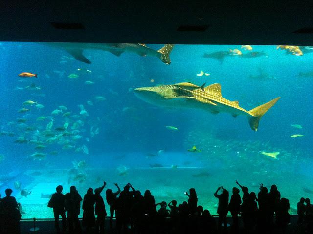 Kuroshio Tank at Churaumi Aquarium, Okinawa