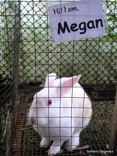 white-rabbits-used-in-organic-farming.jpg