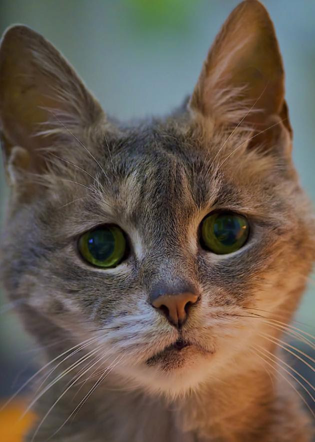 gato-triste-8