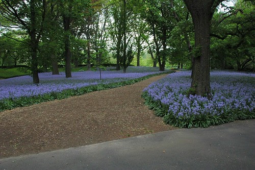 Bluebell Wood, Brooklyn Botanic Garden