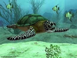 Perierga.gr - Περίεργες αλήθειες για θαλάσσια ζώα