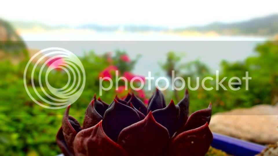 photo 1239040_10151932506431202_218171816_n.jpg