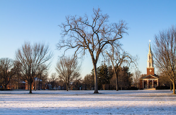 trees standing tall, at Phillips Academy Andover