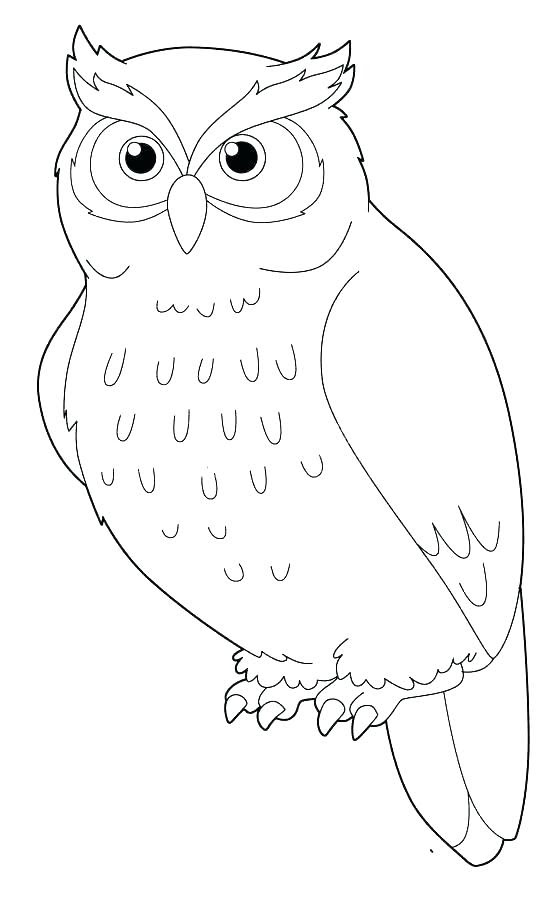Northern Saw Whet Owl coloring page | Free Printable Coloring Pages | 900x560