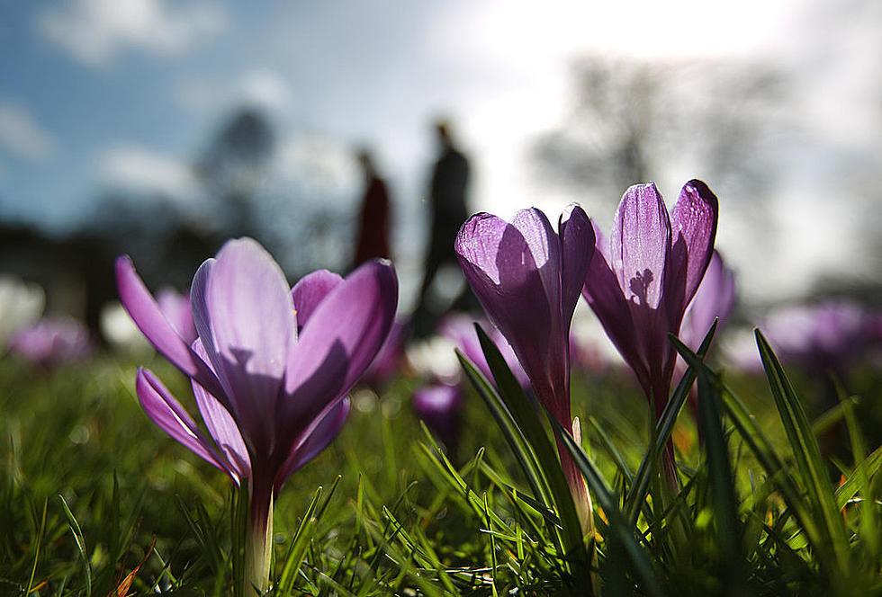Image result for minnesota spring