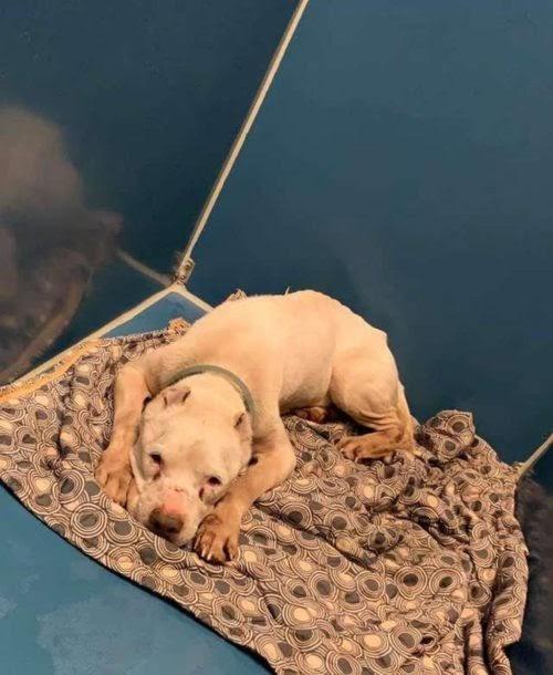 Encuentra a un perrito colapsado en la carretera – Ahora sabe que es lo mejor que le ha pasado