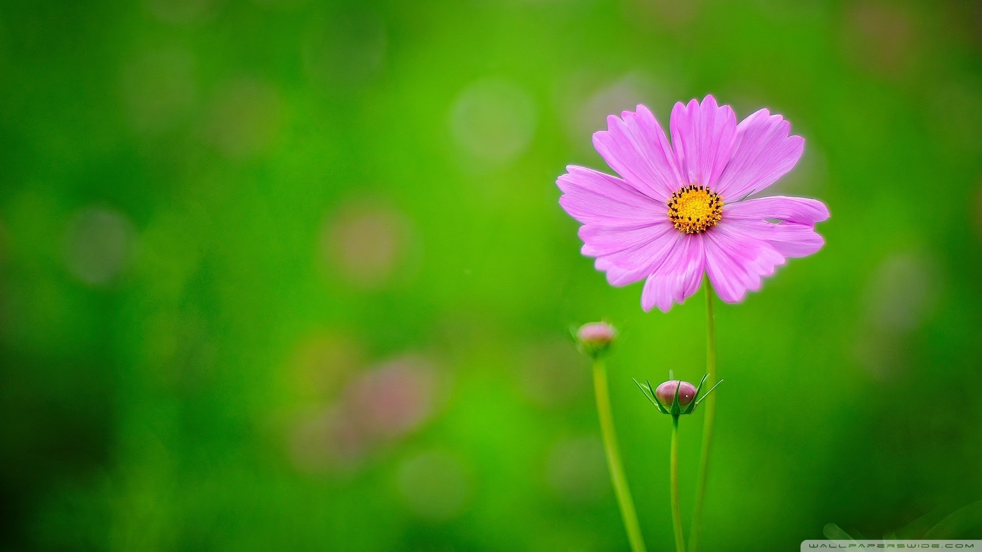 Pink Flower Green Background 4k Hd Desktop Wallpaper For 4k