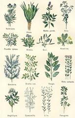 plantes medicinales 1
