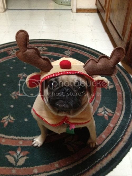 The Pet Blog: Christmas pets