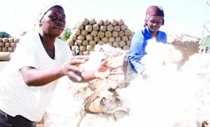 Zimbabwe cotton farmers earned from this year's yield according to a recent article in the state newspaper The Herald. The land redistribution program in this Southern African state has provided farms to people dispossessed by colonialism. by Pan-African News Wire File Photos