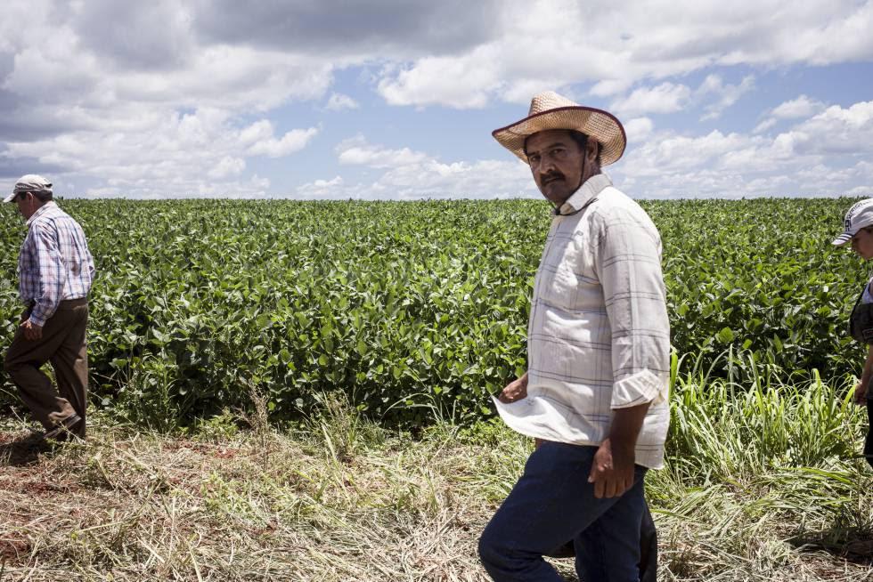 Campesinos recorren las plantaciones de soja de los brasileños, aledañas a las tierras de Guahory (Paraguay).