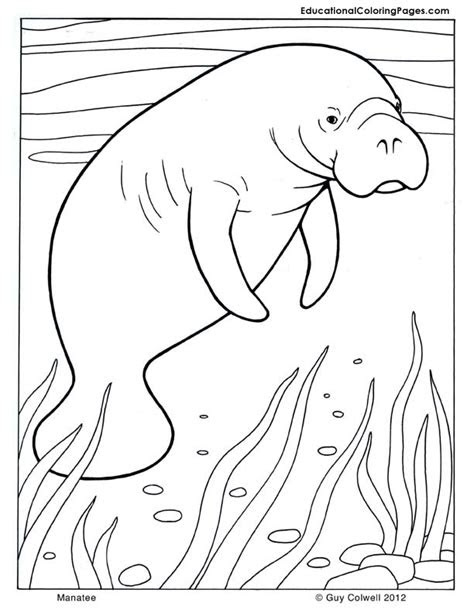 mammals coloring educational fun kids coloring pages