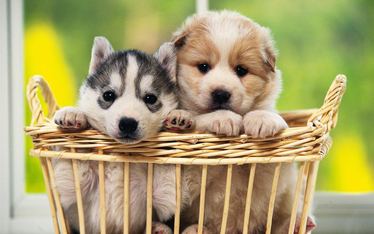1600犬の写真の壁紙 9 19 1280x800 壁紙ダウンロード 1600犬の
