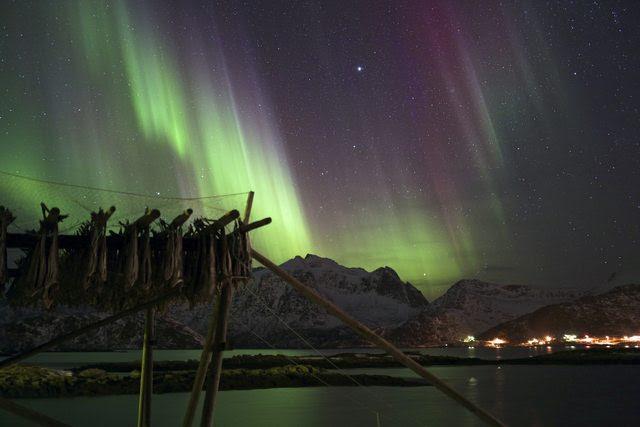 Aurora last night in the Lofoten islands, Norway