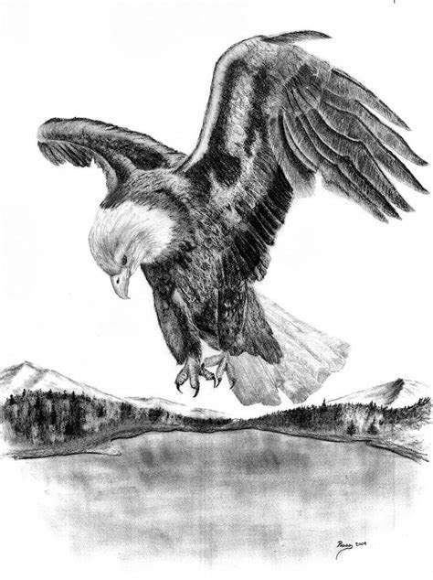 bald eagle facts bald eagle facts eagles pictures