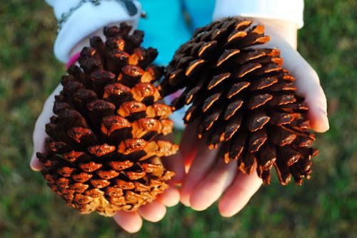 1-17-12 Pinecones