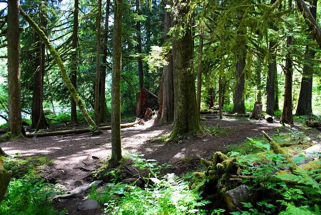 the camping area along Clackamas River Trail