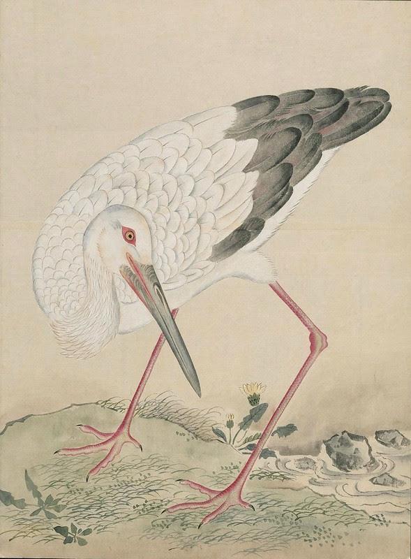 Ink + Watercolour  Bird sketch o