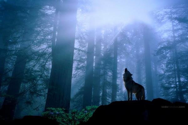 Lobo Aullando A La Luz De La Luna 384