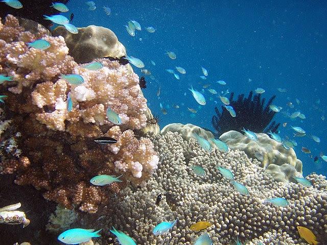 indonesia scuba