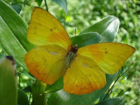 Por: borboletasbr.blogspot
