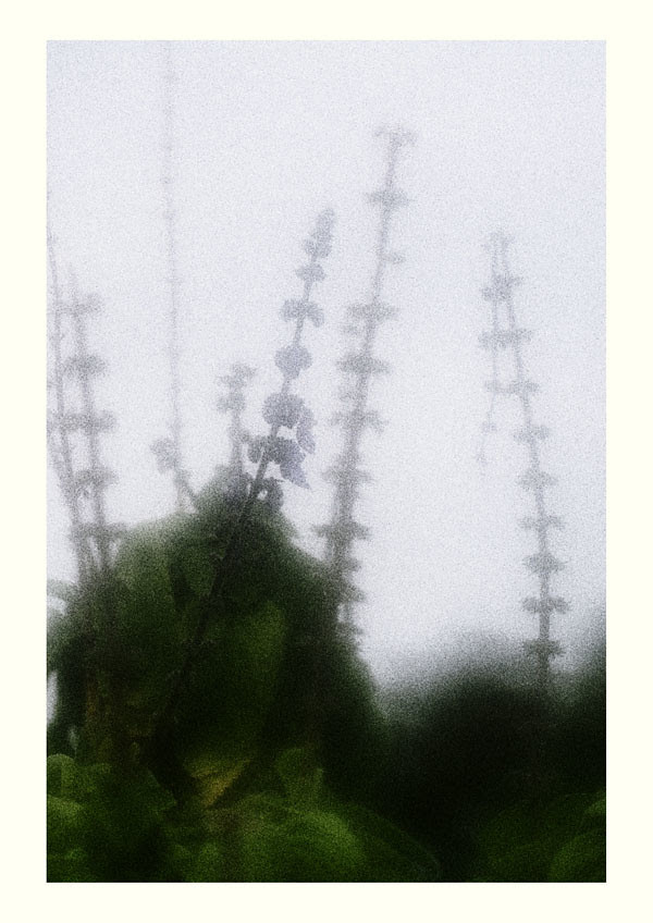 A soft focus grainy photograph of plants taken against the sky.