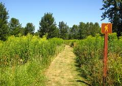Parc de Boucherville, path on île de la commune
